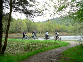 Cycling in the Galloway Forest Park